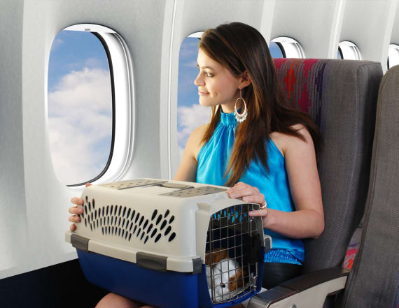 How to keep your pet safe while flying