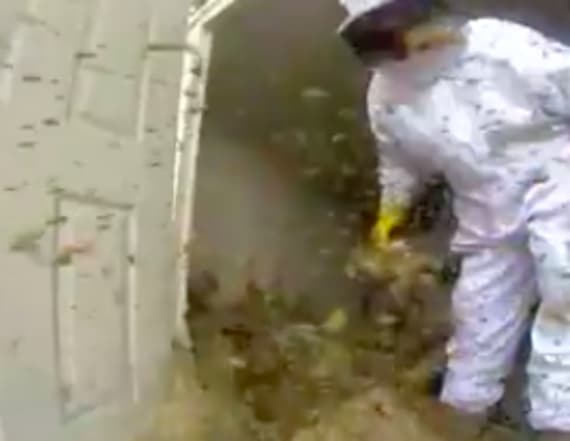 Exterminator breaks up massive hornets nest