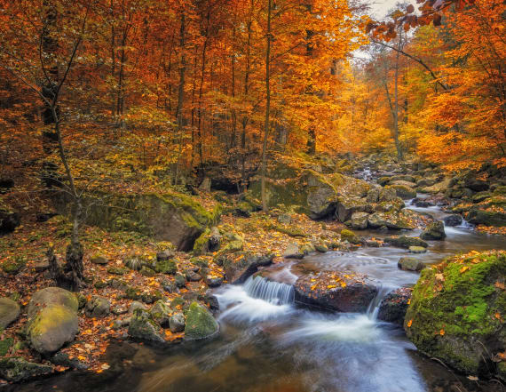 'Extra spectacular' fall foliage expected this year