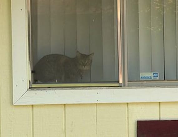 Nuns accused of trapping, relocating neighbors' pets