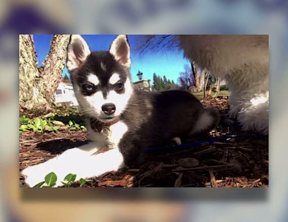 Puppy's death sheds light on deadly mushrooms