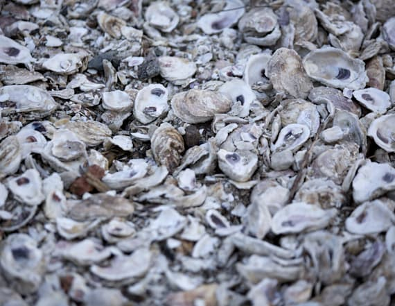 Scientists pitch new uses for trashed oyster shells