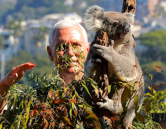 VP Pence, family get close with some koalas