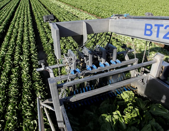 Don't eat any romaine lettuce, CDC now warns