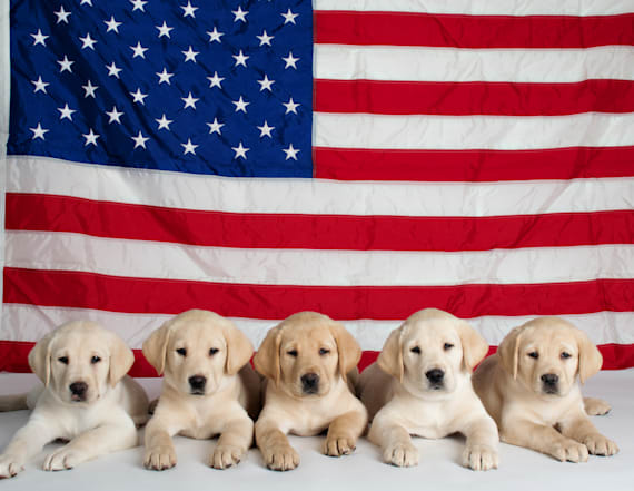 Guide dog hopefuls named after Team USA athletes