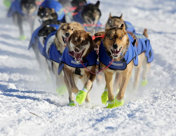 Iditarod sled dog doping scandal prompts new rules