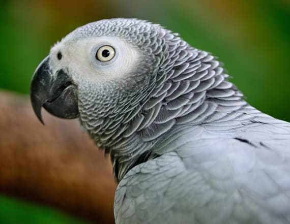 Woman found guilty murder witnessed by parrot