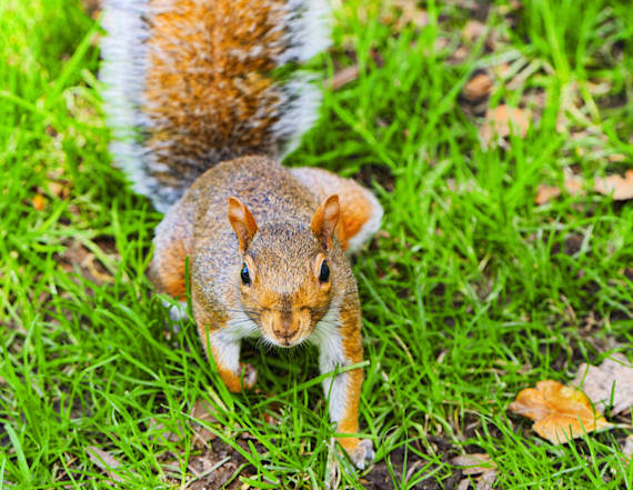 NY hunter likely died from eating squirrel brains