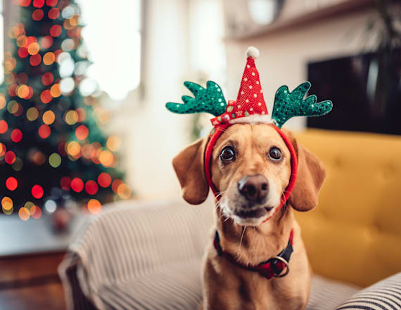 6 cool dog gifts for Christmas