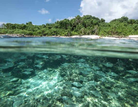 Seychelles sets global standard for conservation