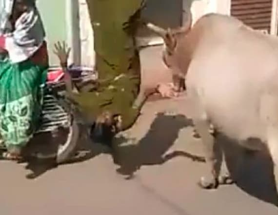 Watch: Bull knocks woman off her scooter