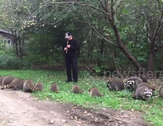 Man attracts dozens of raccoons with flute skills