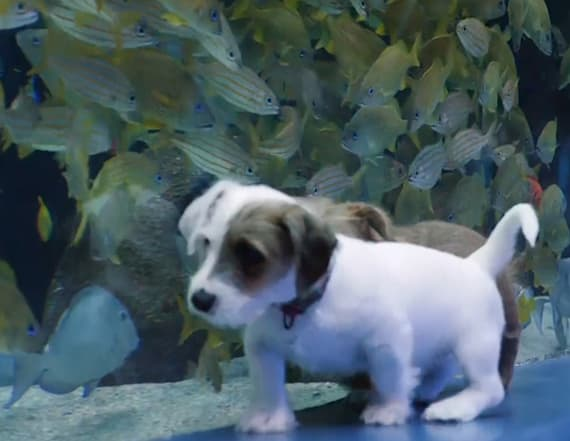 Watch foster puppies roam free in empty aquarium
