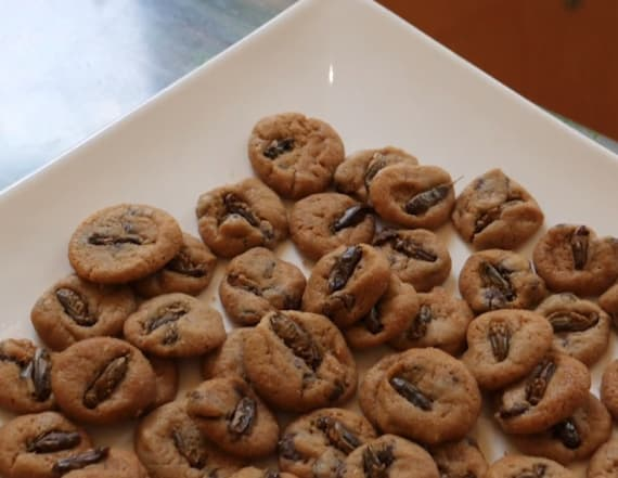 New Orleans café serves cookies made with insects