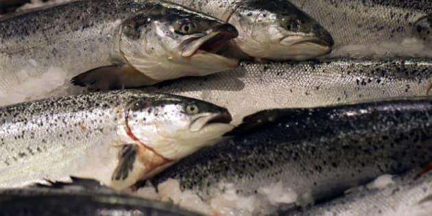 Norway's farmed salmons are displayed at a supermarket, on December 21, 2012 at the Kremlin-Bicetre, outside Paris.  AFP PHOTO / JOEL SAGET        (Photo credit should read JOEL SAGET/AFP/Getty Images)