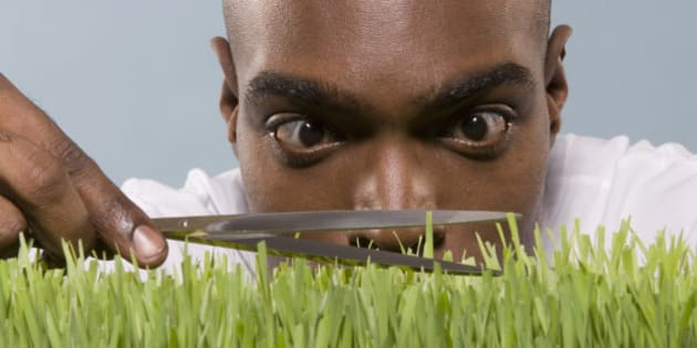 Man cutting wheatgrass with scissor, close-up