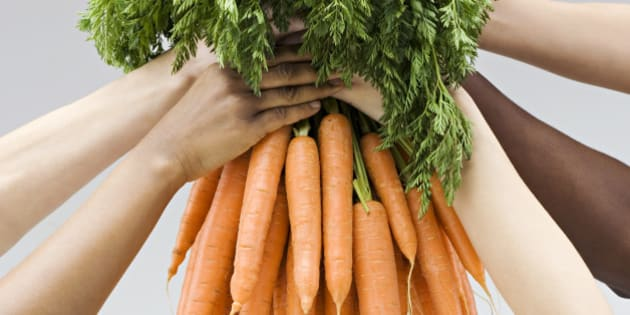 Hands holding a fresh bunch of carrots
