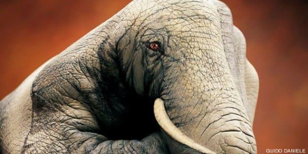 Pintura Corporal Retratos Realistas De Animales En Manos Fotos