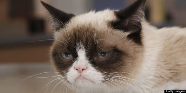 GOOD MORNING AMERICA - Internet sensation Grumpy Cat appears on 'Good Morning America,' 3/22/13, airing on the ABC Television Network. (Photo by Lou Rocco/ABC via Getty Images) GRUMPY CAT