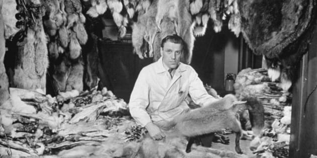 Man sitting among raw furs at the Hudson's Bay Company.  (Photo by Wallace Kirkland/Time Life Pictures/Getty Images)