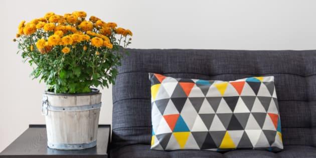 bright cushion on a sofa  and...