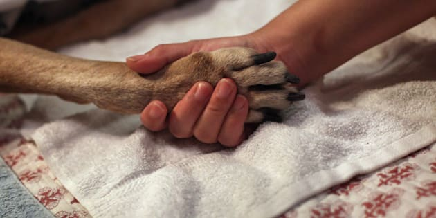 NEW YORK, NY - MAY 09:  Tomo McLoyd holds the paw of her dog Rocky, 14, as veterinarian Wendy McCulloch euthanizes the pet at their apartment on May 9, 2012 in New York City. McLoyd had made the difficult decision to call McCulloch to perform the procedure after the pet could no longer walk. End of life issues have become increasingly important for pet owners, as advanced medical treatments and improved nutrition are extending pets lives well into old age. McCulloch runs Pet Requiem, a home veterinary service designed to provide geriatric care and in-home euthanasia for dying pets in the New York and New Jersey area. Many pet owners are choosing such in-home care to try and provide a humane and compassionate 'good death' for their beloved pets.  (Photo by John Moore/Getty Images)