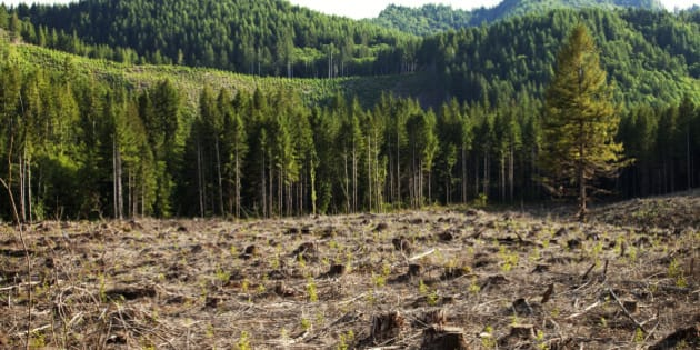 Essay on conservation of forest