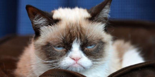 「猫のツンデレ」を科学的に探究:東大研究者ら