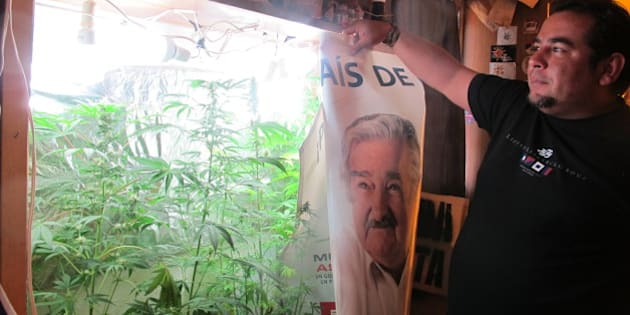FLORIDA, URUGUAY -  OCTOBER 20: Julio Rey, 38, grows a few marijuana plants in a makeshift cabinet, complete with special lighting to help the bush grow in Florida, Uruguay on October 20, 2013. (Photo by Juan Forero / The Washington Post via Getty Images)