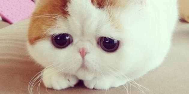 These 16 Fluffy Animals Will Make You Say Awww | Bored Panda |Cute Fluffy Talking Animals