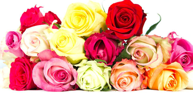 Flower meanings can help you choose a perfect valentines bouquet colorful roses beautiful flower bouquet on white background mightylinksfo