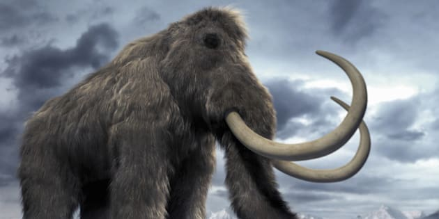 Woolly Mammoth Clone Is Now Possible, Say Scientists