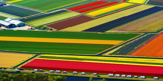 An aerial shot shows a colourful field of flower bulbs in Lisse, on April 24, 2011. Tourists traveling in mobile homes can be seen parked on the side of the field. AFP PHOTO / ANP / ROBIN UTRECHT     ***Netherlands out - Belgium out*** (Photo credit should read ROBIN UTRECHT/AFP/Getty Images)