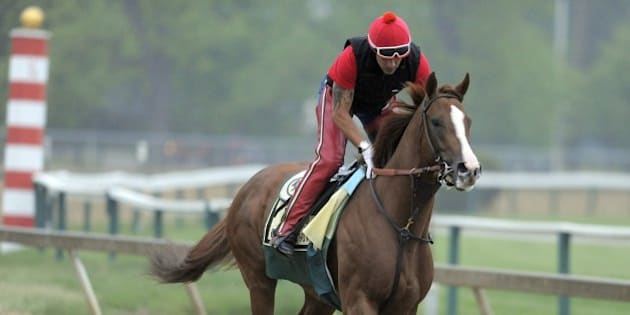 Kentucky Derby winner California Chrome, with exercise rider Willie Delgado up, during a morning workout at Pimlico Race Course in preparation for the 139th Preakness Stakes in Baltimore on Wednesday, May 14, 2014. (Lloyd Fox/Baltimore Sun/MCT via Getty Images)
