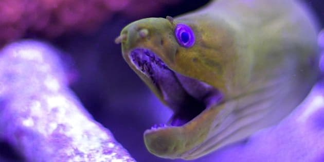 A strange creature, this one is.  Shot through the glass at an exhibit in Key Largo, Florida
