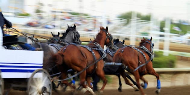 Horses racing at the chuckwagon race on Day 1 in Calgary Stampede 2010