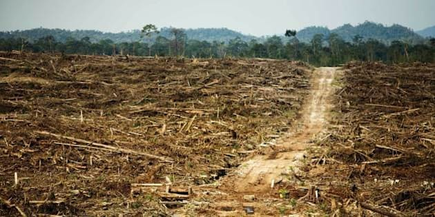 """This photo is from <a href=""""http://ran.org/cargillreport"""" target=""""new"""" rel=""""nofollow"""">an investigative report</a> from Rainforest Action Network that presents evidence that Cargill is operating two undisclosed palm oil plantations in West Kalimantan, Indonesia.  The destruction of primary rainforest by Duta Palma. West Kalimantan, Borneo. Cargill was a key purchaser of palm oil from this notorious rainforest destroyer up until 2008. Photo: David Gilbert/RAN"""