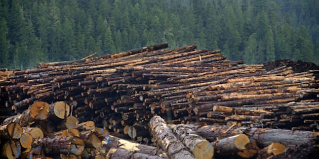 Canada Largest Contributor To Deforestation Worldwide: Study