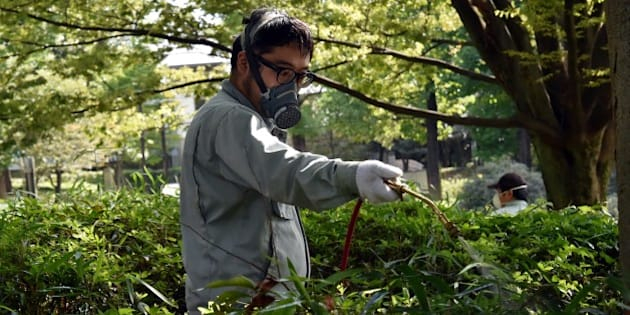 Workers spray insecticide at Yoyogi park in Tokyo on September 5, 2014. Tokyo on September 5 closed most of Yoyogi Park, a popular green spot in the Japanese metropolis, after dengue-carrying mosquitoes were found there, an official said. The outbreak is the first in 70 years in Japan and has so far infected 55 people, including a young model who has posed for Japanese Playboy and had been sent to the park for a photo shoot. AFP PHOTO / Yoshikazu TSUNO        (Photo credit should read YOSHIKAZU TSUNO/AFP/Getty Images)