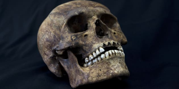 A skull from the recently discovered Xaloctan site is displayed at the National Institute of Anthropological Studies at Mexico's National Autonomous University in Mexico City, Friday, Feb. 8, 2013. Archaeologists say they have turned up about 150 skulls of human sacrifice victims at a field in Xaloctan, central Mexico near the Teotihuacan pyramids. Experts are puzzled by the unexpected find of such a large number of skulls at what appears to have been a small, unremarkable shrine. The heads were carefully deposited in rows or in small mounds, mostly facing east toward the rising sun, sometime between 660 and 860 A.D. (AP Photo/Dario Lopez-Mills)