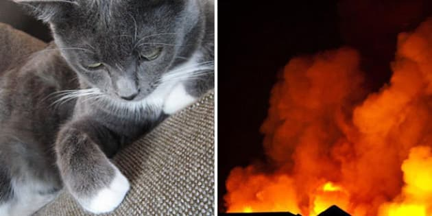 Edmonton Cat Found Living In Wall 4 Months After Condo Fire