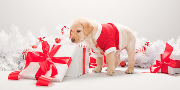 Pet Gift Ideas What To Your Dogs And Cats For Christmas