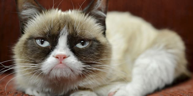 """In this undated photo provided by Nestle Purina PetCare is Grumpy Cat. It probably won't affect her famous mood, but Grumpy Cat now has an endorsement deal. The St. Louis-based company announced Tuesday, Sept. 17, 2013, the frown-faced Internet sensation, real name Tardar Sauce, is now the """"spokescat"""" for a Friskies brand of cat food. (AP Photo/Nestle Purina PetCare)"""