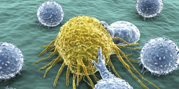 """L'étude sur le cancer et le """"manque de chance"""" contestée"""