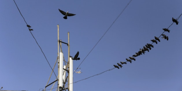 Birds sit on cables connected to a mobile phone telecommunications tower in Mumbai, India, on Wednesday, Jan. 29, 2014. India got bids totaling 446.1 billion rupees ($7.12 billion) on the first day of a wireless spectrum auction on Feb. 3, the third effort by the government to raise revenue from the sale of airwaves in the last 15 months. Photographer: Dhiraj Singh/Bloomberg via Getty Images