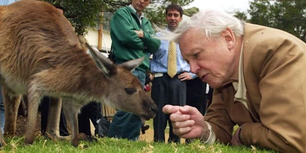 Leading natural history authority and BBC broadcaster Sir David Attenborough, watched by zoo staff, reaches for a kangaroo during his visit to Taronga Zoo in Sydney, Australia, Tuesday, Oct. 14, 2003. Attenborough is in Australia to promote his natural history series The Life of Mammals. (AP Photo/Dan Peled)