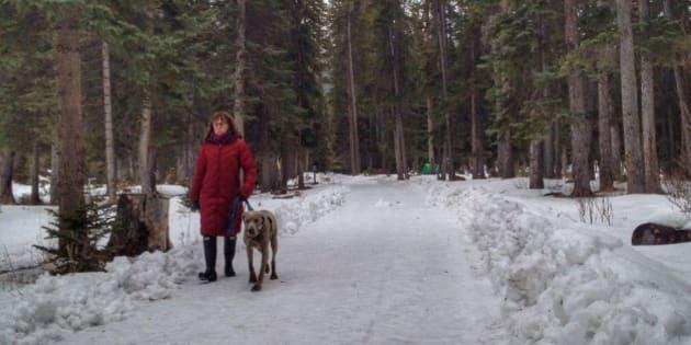 A woman and her Weimaraner walk through the snow laden forest in Banff, Alberta