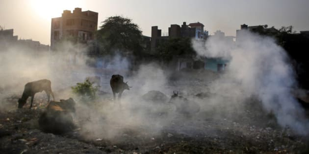 Cows are covered in smoke rising from burning garbage in New Delhi, India, Friday, Oct. 17, 2014. India launched the Air Quality Index Friday to measure air quality across the nation that is home to some of the most polluted cities in the world. It will measure eight major pollutants that impact respiratory health in cities with populations exceeding 1 million in the next five years and then gradually the rest of the country, Environment Minister Prakash told reporters. The World Health Organization said earlier this year that the Indian capital had the worst air quality in the world, surpassing Beijing, a statement that New Delhi has vehemently disputed. (AP Photo/Altaf Qadri)