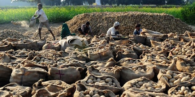 Indian farmers sort harvested potatoes in a field in the village of Fafamau on the outskirts of Allahabad on February 22, 2015. AFP PHOTO/SANJAY KANOJIA        (Photo credit should read Sanjay Kanojia/AFP/Getty Images)