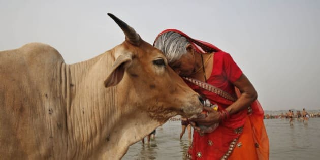 A woman worships a cow as Indian Hindus offer prayers to the River Ganges, holy to them during the Ganga Dussehra festival in Allahabad, India, Sunday, June 8, 2014. Allahabad on the confluence of rivers the Ganges and the Yamuna is one of Hinduism's holiest centers. (AP Photo/Rajesh Kumar Singh)